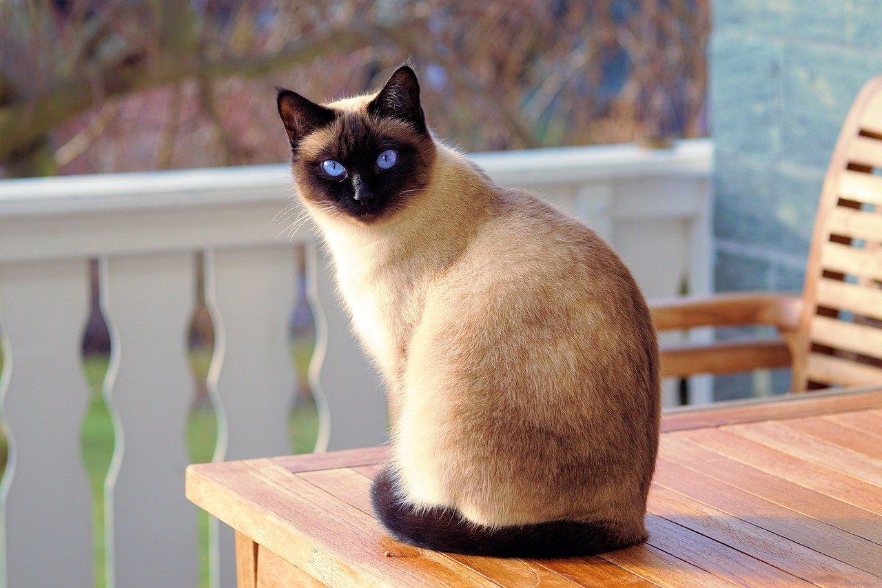 animalerie ligne chat